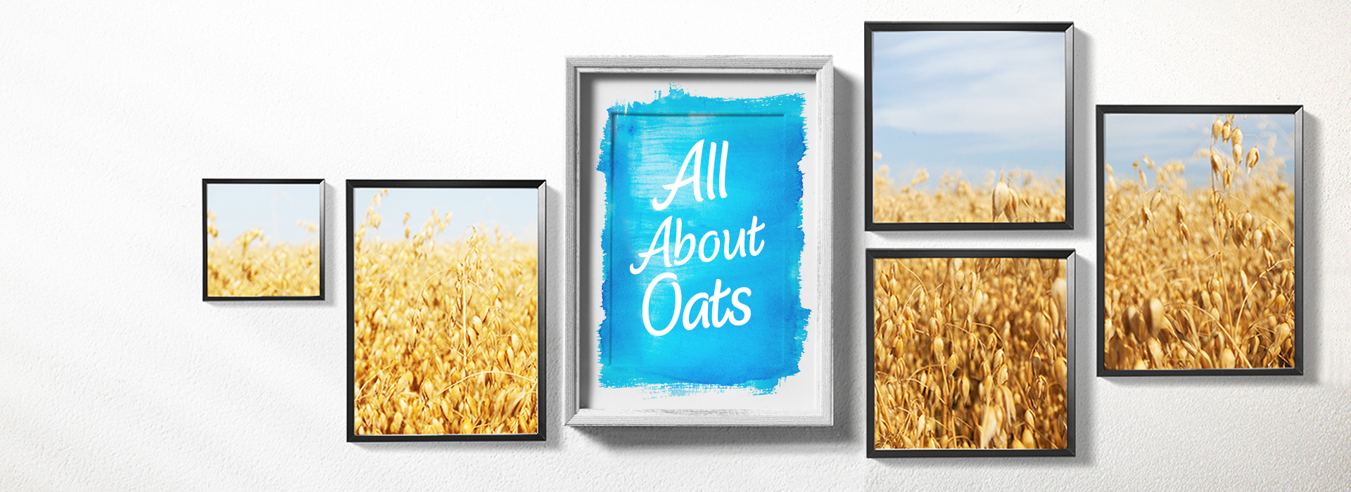 Pictures with oat fields